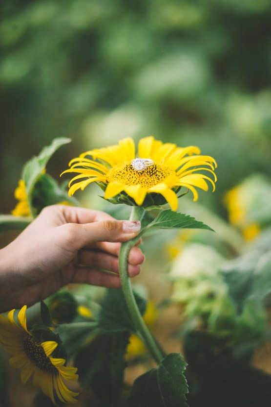 French Sunflower Wedding Inspiration | Teri B Photography 14