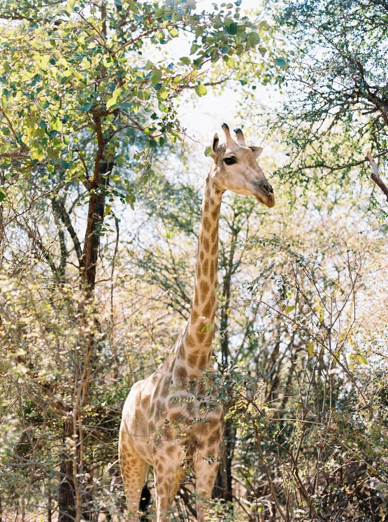 Royal Livingtone by Anantara – Zambia Honeymoon and Destination Wedding Guide – Love From Mwai – Exalt Africa – Joy Proctor Design – Stepan Vrzala – Exalt Africa – Bridal Musings 24