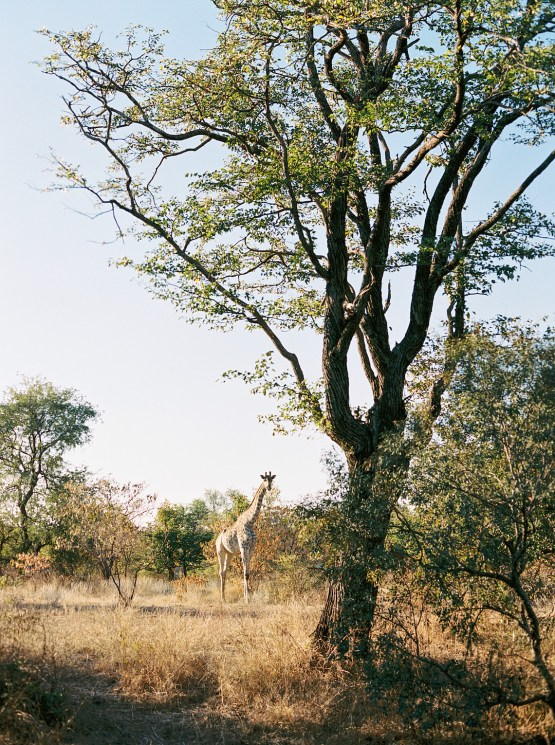 Royal Livingtone by Anantara – Zambia Honeymoon and Destination Wedding Guide – Love From Mwai – Exalt Africa – Joy Proctor Design – Stepan Vrzala – Exalt Africa – Bridal Musings 41