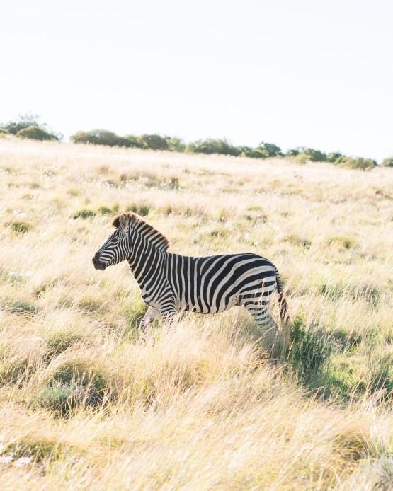Dream South African Honeymoon Itinerary – Claire Eliza Destination Wedding Photographer – Bridal Musings – African Wedding Week 1