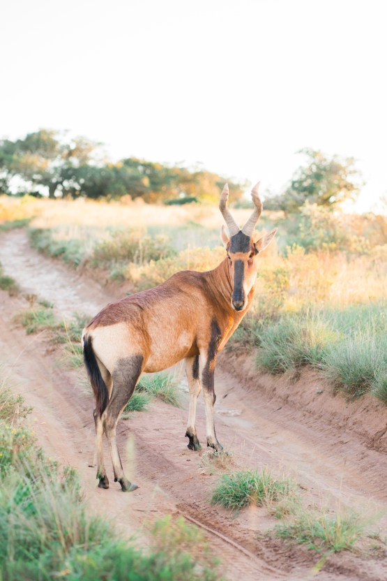 Dream South African Honeymoon Itinerary – Claire Eliza Destination Wedding Photographer – Bridal Musings – African Wedding Week 24