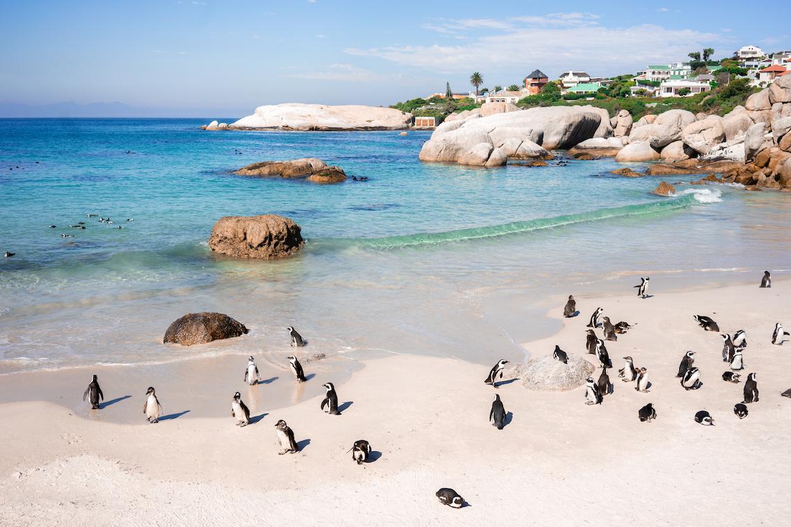 Dream South African Honeymoon Itinerary – Claire Eliza Destination Wedding Photographer – Bridal Musings – African Wedding Week 25